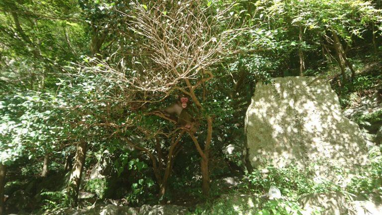 【サイクリング】箕面の大滝でお猿さんをみる