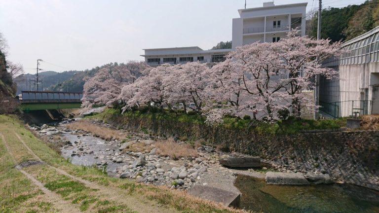 【サイクリング】猪名川町、能勢町、川西市、池田市の桜の名所を走る