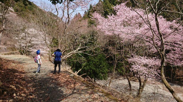 【ハイキング】猪名川町・能勢町の桜名所巡り