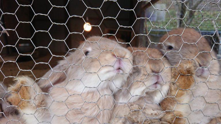 【サイクリング】福知山動物園でウサギと遊ぶ
